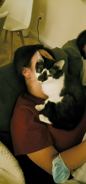 Panda - Kitty Kisser; Purrfectly Imperfect