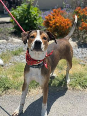 1 year old Leo Hes a great dog looking for any family to take him on new adventures He loves