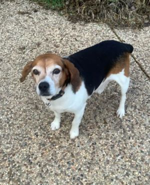 Tommy Lee Jones has a very calm personality He is happy whether hes hanging out while his foster f