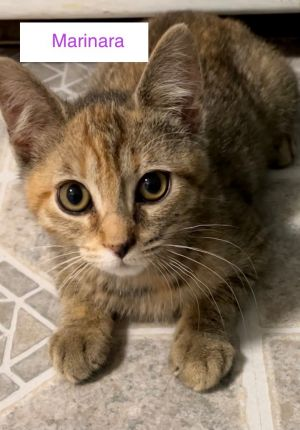 They LOVE other cats and kittens and have made lots of friends in their foster home They have also