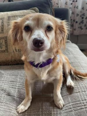 You can fill out an adoption application online on our official website Meet Trixie Trixie was sur
