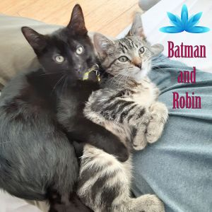 Meet super kitties Batman and Robin fostered with love in the big apple this playful and cuddly br