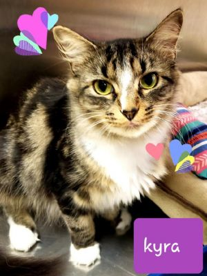 Sweet and playful loving girl and super affectionate Has CH cerebullar hypoplasia mild Just makes