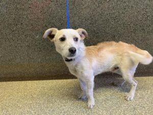 I1351061 Terrier Dog