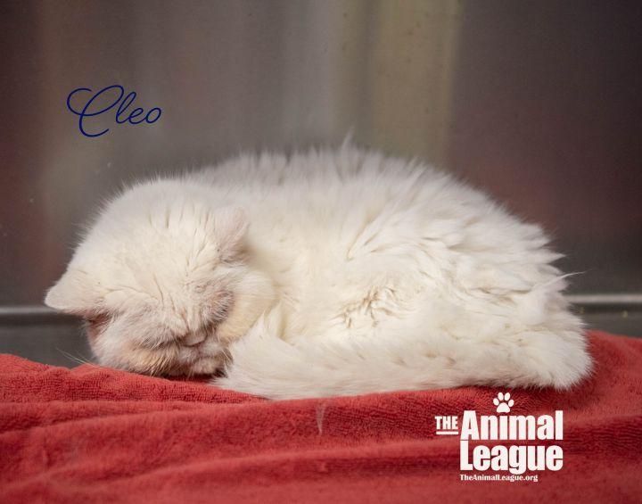 Cleo 3