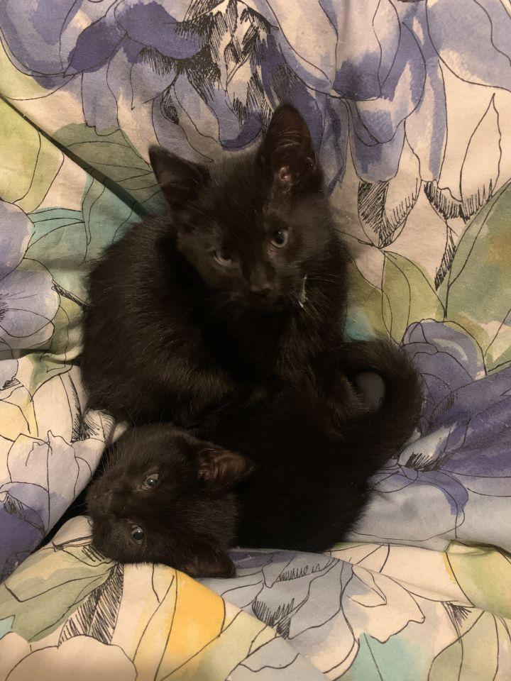 Eliza & Angelica 1