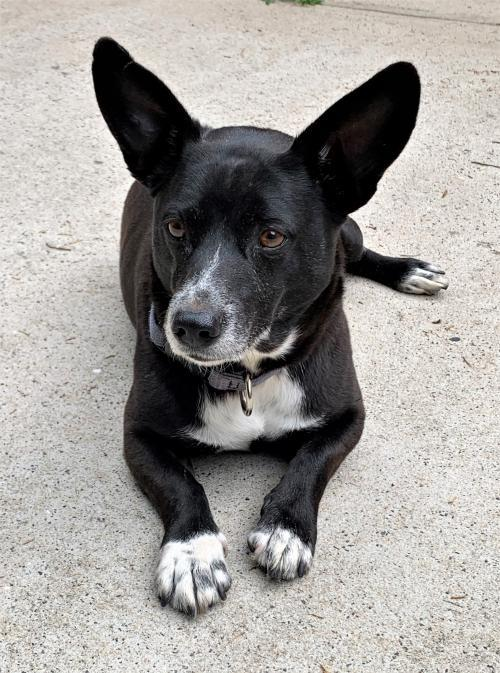 Lupin - ADOPTED!! 1