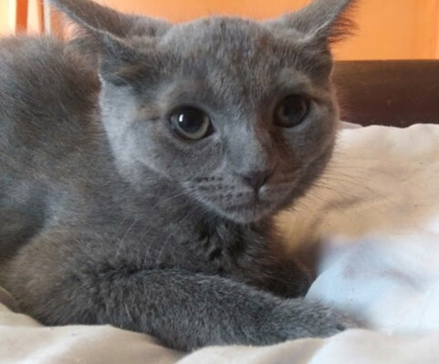 Samantha (Tow kittens) 2