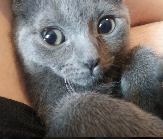 Samantha (Tow kittens)
