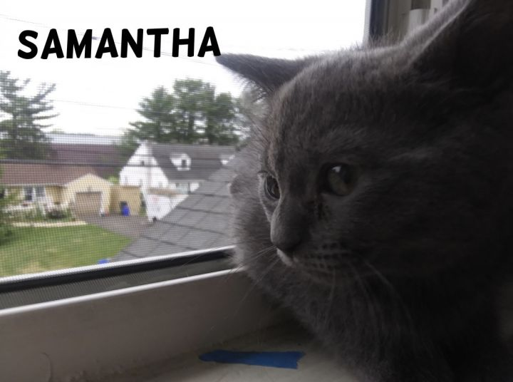 Samantha (Tow kittens) 3
