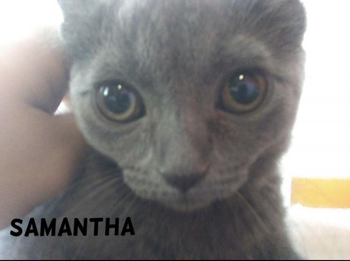 Samantha (Tow kittens) 4
