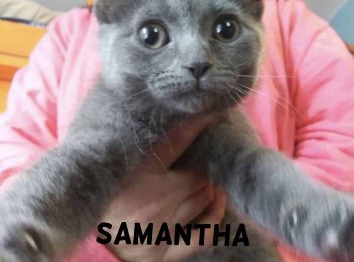 Samantha (Tow kittens) 5
