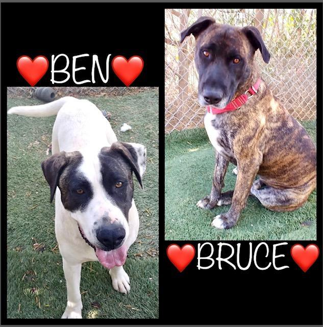 Ben and Bruce 1