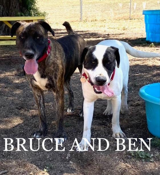Ben and Bruce 2