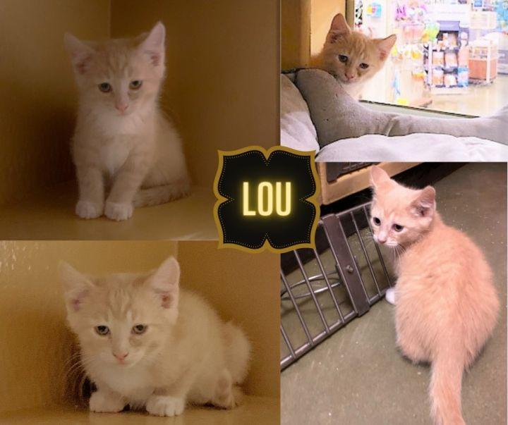 Lou 1