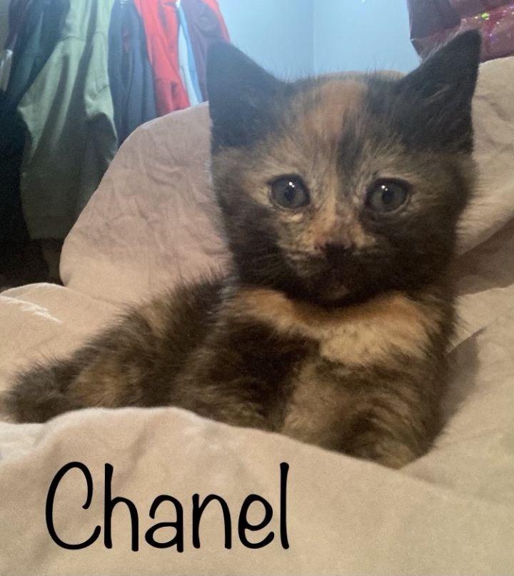 Chanel & Coco 2
