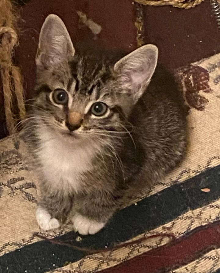 April is our adorable poof!  READ BIO BEFORE INQUIRING OR APPLYING 2