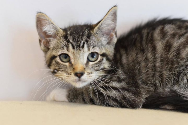 April is our adorable poof!  READ BIO BEFORE INQUIRING OR APPLYING 1