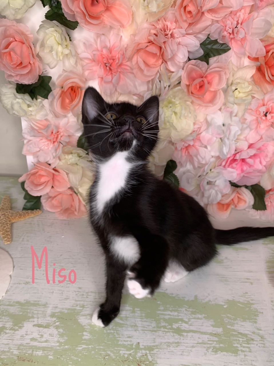 Miso detail page