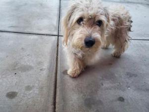 I1351181 Terrier Dog