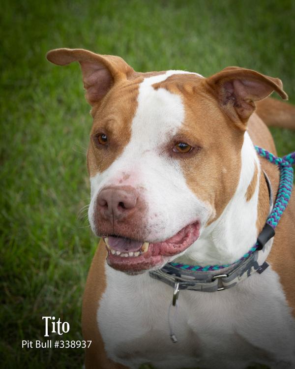 Tito 1