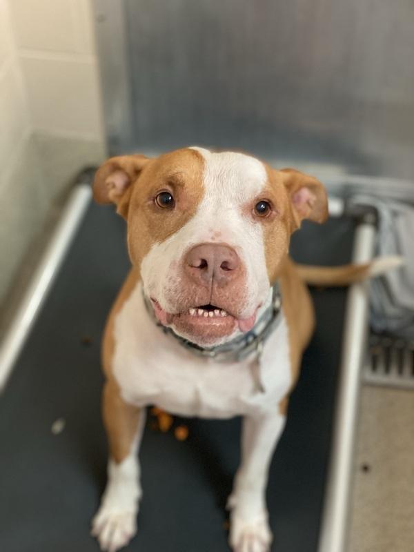 Tito 2