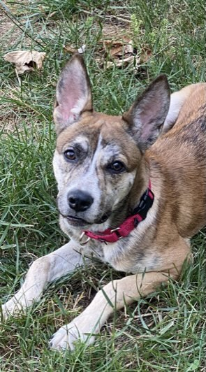Pup Reba-adoption pending