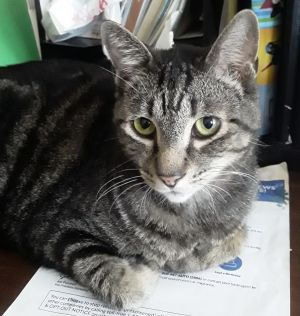 We cant believe that no one has adopted Joey This guy is the tabby hunk of the century And so