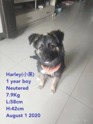 In 2021 Harley was seen with a limping leg Before Harley was rescued he received no love or comfo