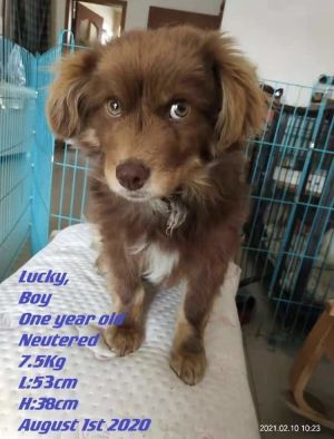 Lucky was born into a litter at a garage in Beijing Growing up Lucky did not receive as much as