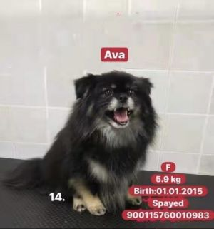 Ava was found covered in tics and flees in a neighborhood in China Ava is such a delight to be
