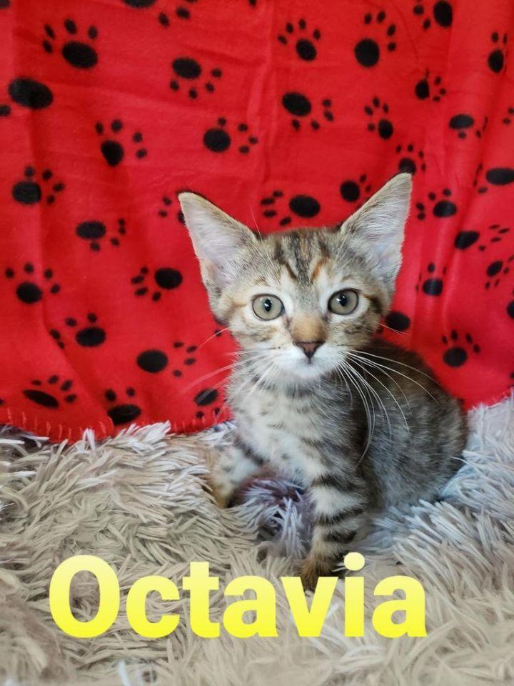 Octavia 1