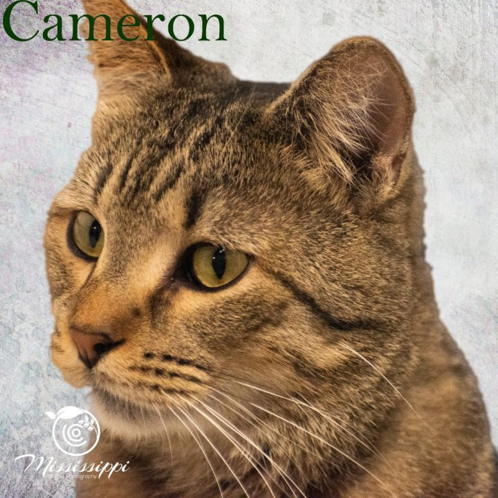 Cameron 1
