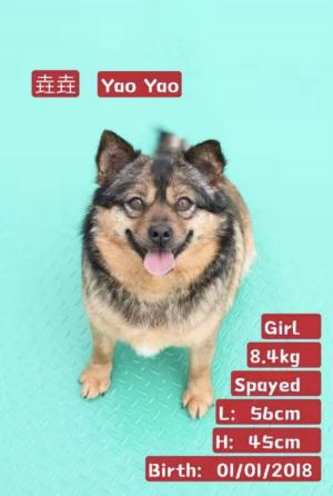 DOG WILL BE ARRIVING IN 67 YaoYao was originally a stray who would wander around with his son in a
