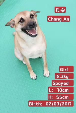 ChangAn used to be a stray who would wander around the neighborhood Luckily the people in the comm