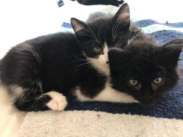 Max and Furiosa 1
