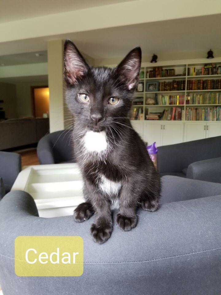 Cedar 1