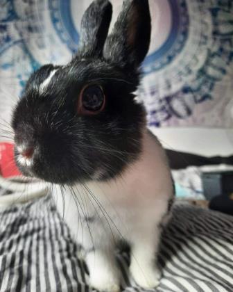 Tilley (Oreo)