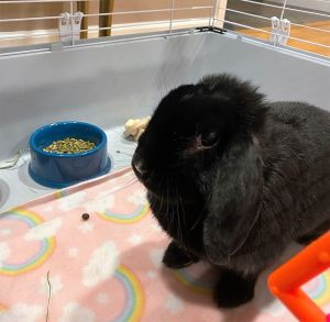 Hannah had been dumped outside when her owner tired of having her for a pet She is a sweet little