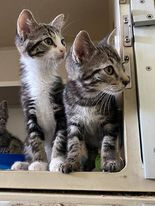Pete 'n Pierre -Snuggly Brothers