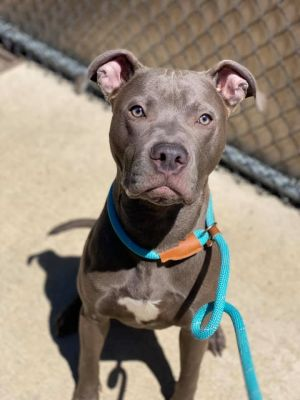 Money A227326 Money is a 2 year old male who came into the shelter on 511 as a stray Handling