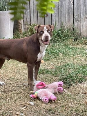 Blue is a sweet boy who loves to play and spend time with his people He loves t