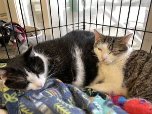 This adorable duo is Dexter and Miss Kitty and they are both 4 years old and came to us as
