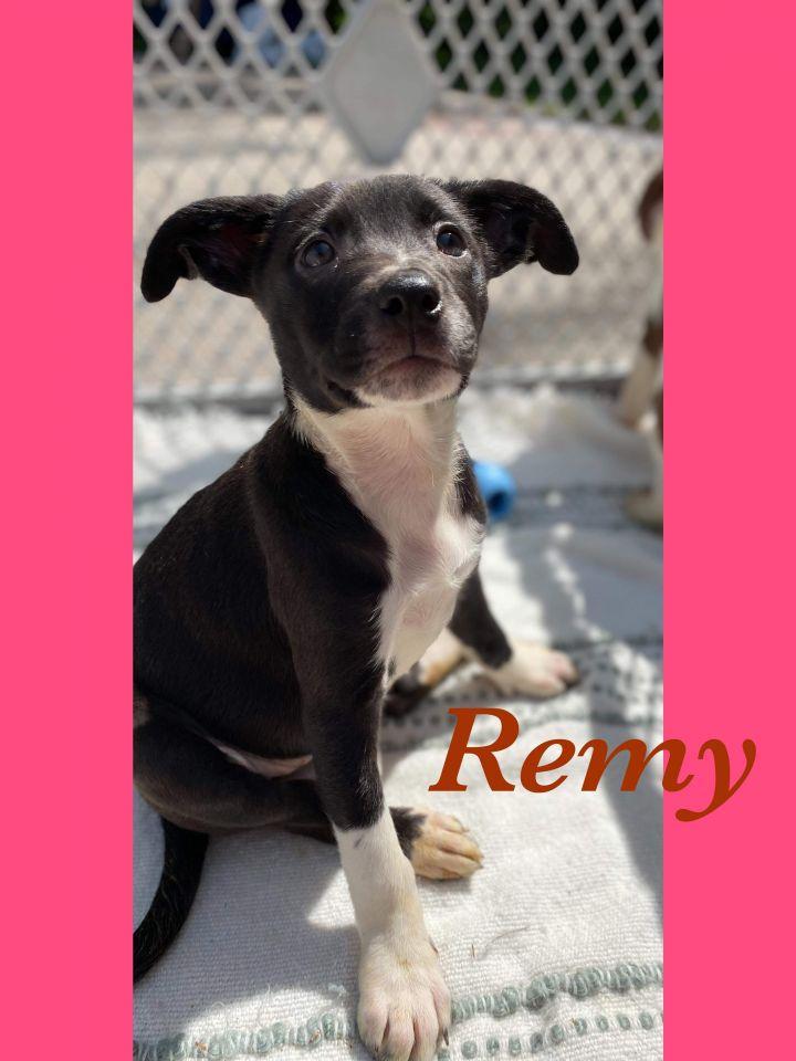Remy 1