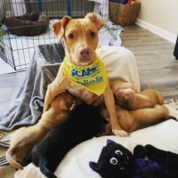 Stella( loves kids-30 lbs of love) 4
