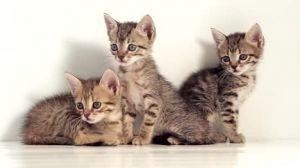 Kittens!! (Informational Posting)