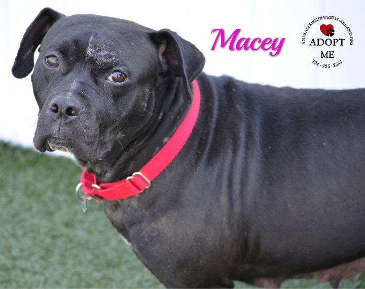 Macey 2