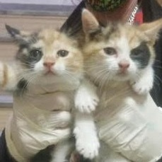 KITTENS ARE HERE Yes folks its Kitten Season in the Northeast and wonderful kittens are waiting