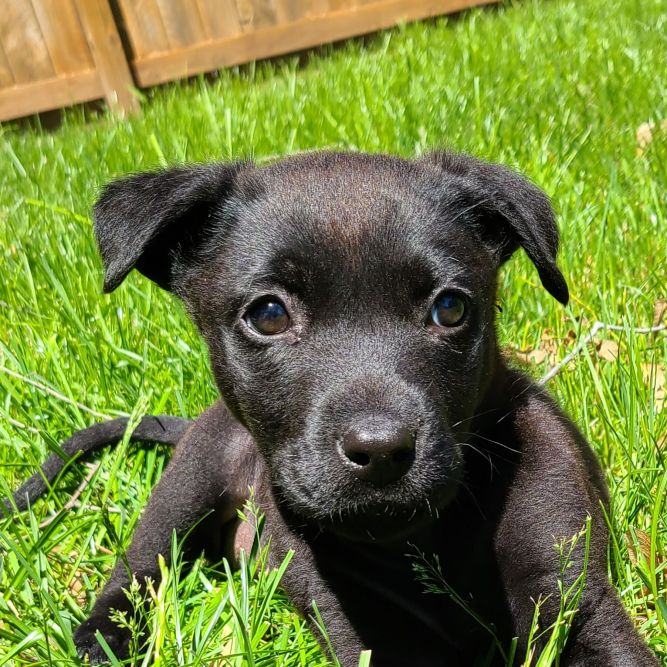 Winnie - current applications under review / not taking additional applications