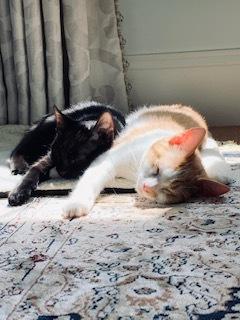 Umi & Loki/Courtesy post